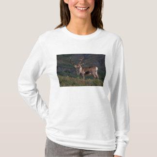 T-shirt Na, Etats-Unis, Alaska, Denali NP, caribou de