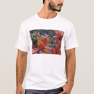 T-shirt Na, Etats-Unis, Alaska, Denali NP givré,