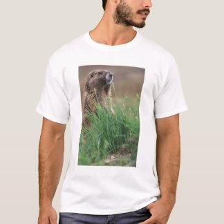 T-shirt Na, Etats-Unis, Washington, NP olympique, 2