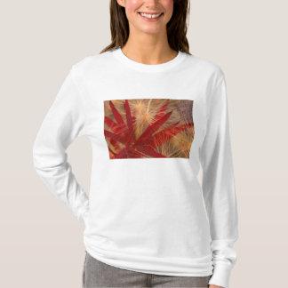 T-shirt Na, les Etats-Unis, l'Alaska, Denali NP, Fireweed