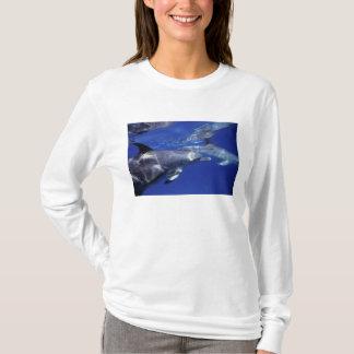 T-shirt Océan atlantique a repéré des dauphins. Bimini,