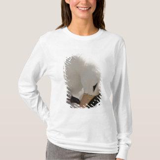 T-shirt Océan atlantique du sud, Îles Falkland, nouvelle