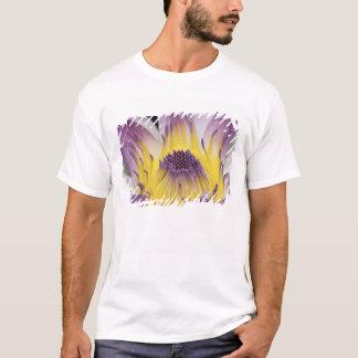 T-shirt Océanie, Fidji, Panama pourpre Pacifica Nymphea