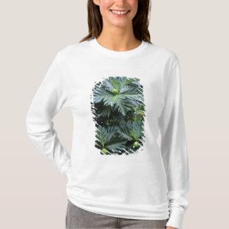 T-shirt Océanie, South Pacific, Polynésie française,