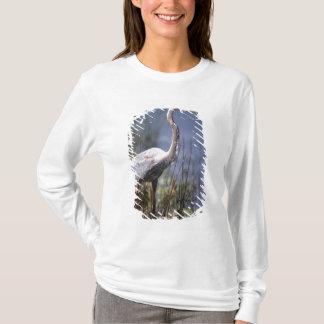 T-shirt Oiseau d'eau de héron de grand bleu trouvé partout