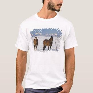 T-shirt okotoks, Alberta, Canada