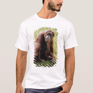 T-shirt Orang-outan se reposant sur l'herbe et regardant