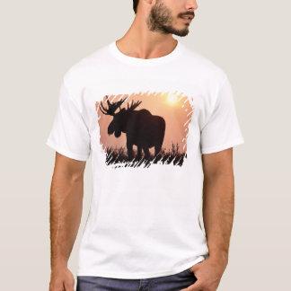 T-shirt orignaux, alces d'Alces, taureau avec de grands