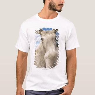 T-shirt Orignaux sur un champ, Suède