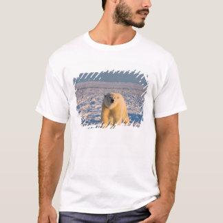 T-shirt ours blanc, maritimus d'Ursus, sur la glace et la