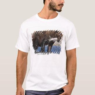 T-shirt Ours de Brown, ours gris, avec le crochet saumoné,