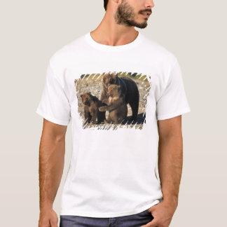 T-shirt Ours de Brown, ours gris, truie avec des petits