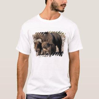 T-shirt Ours de Brown, ours gris, truie avec le regard de