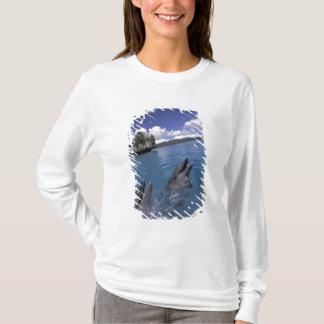 T-shirt Pacifique, Micronésie, Palaos, Bottlenose