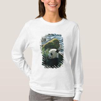 T-shirt Panda mangeant le bambou par la berge, Wolong, 3