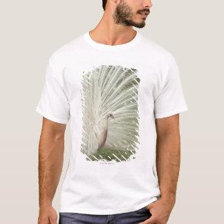 T-shirt Paon albinos