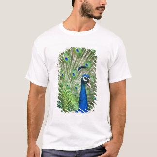 T-shirt Paon criard