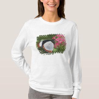T-shirt Papillon d'Afrique