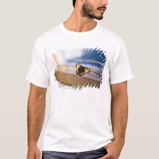 T-shirt Papillon essayant de sortir, la Suède