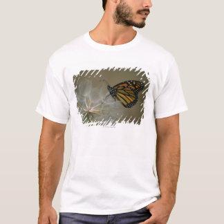 T-shirt Papillon sur le pissenlit