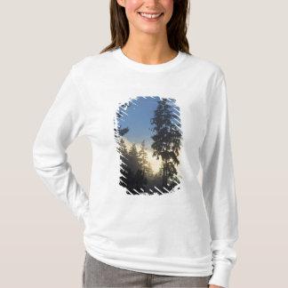 T-shirt Parc de Stanley, bois, roulement marin de