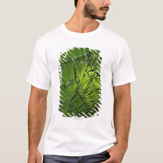 T-shirt Parc national de Bach mA