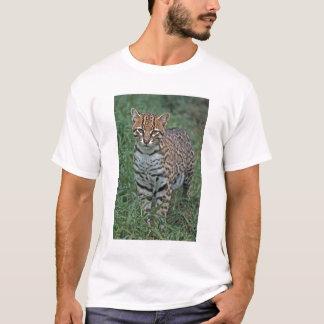 T-shirt Pardalis de Leopardus d'OCELOT) AMÉRIQUE CENTRALE