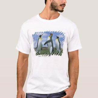 T-shirt Patagonicus du Roi pingouins, d'Aptenodytes),