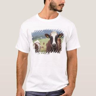 T-shirt Pâturage des vaches
