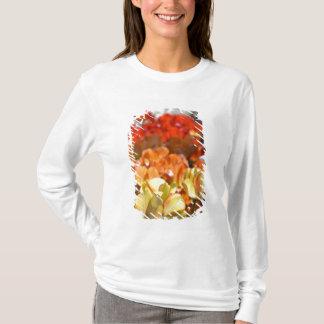 T-shirt Pays-Bas aka Hollande), Lisse. Keukenhof