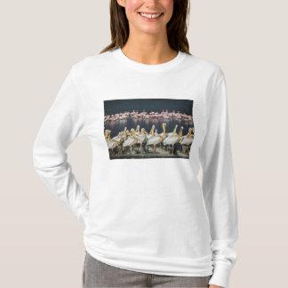 T-shirt Pélicans blancs, onocrotalus de Pelecanus, lac