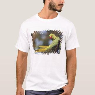 T-shirt Perruche de Roseringed, parc national de Keoladeo,