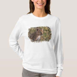 T-shirt Petit animal de lion (Panthera Lion),