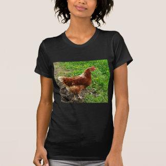 T-shirt Petit poulet rouge - couche libre d'oeufs de gamme