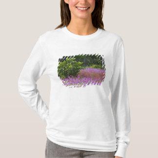 T-shirt Phlox de Drummond, drummondi de Phlox, Hilton Head