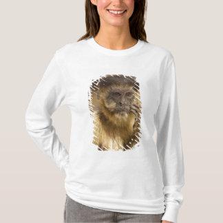 T-shirt Piaui, Brésil, capucin de Brown, apella de Cebus,