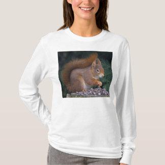 T-shirt Pièce en t de brunch d'écrou