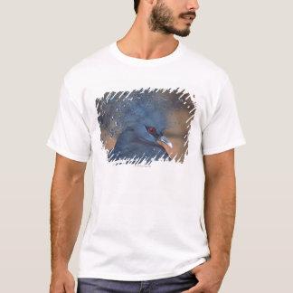 T-shirt pigeon couronné