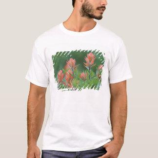 T-shirt Pinceau indien, miniata de Castilleja, Ouray,