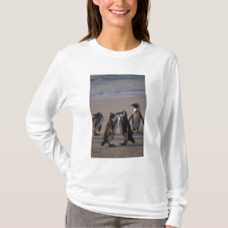 T-shirt Pingouin africain (demersus de Spheniscus) ou âne