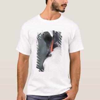 T-shirt Pingouin de Gentoo dans le port Antarctique de