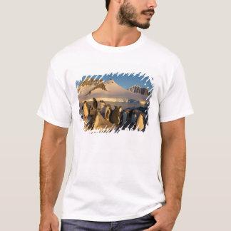 T-shirt pingouin de gentoo, Pygoscelis Papouasie, colonie