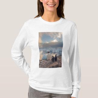 T-shirt pingouin de gentoo, Pygoscelis Papouasie, parent