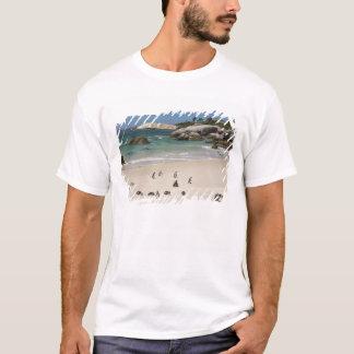 T-shirt Pingouins à la plage de rochers, ville de Simons,