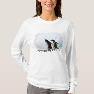 T-shirt Pingouins de Gentoo sur le rivage rocheux avec le