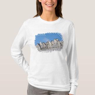 T-shirt pingouins de jugulaire, Pygoscelis Antarctique,