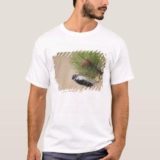 T-shirt Pivert velu, villosus de Picoides, femelle