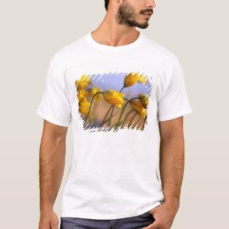 T-shirt Plan rapproché des jonquilles