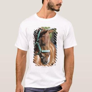 T-shirt Plan rapproché d'un cheval 4