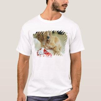 T-shirt Plan rapproché d'un chien avec un cadeau